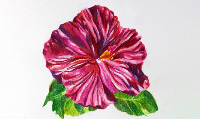 Drawing Flowers In Colored Pencil A Simple Tutorial